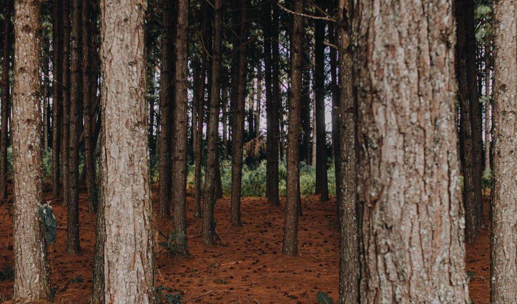 Avantajul de a refolosi lemnul